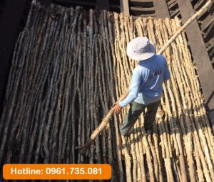 Chọn cừ tràm có tiêu chuẩn chất lượng cao Cừ tràm chất lượng cao tại Hưng Thịnh