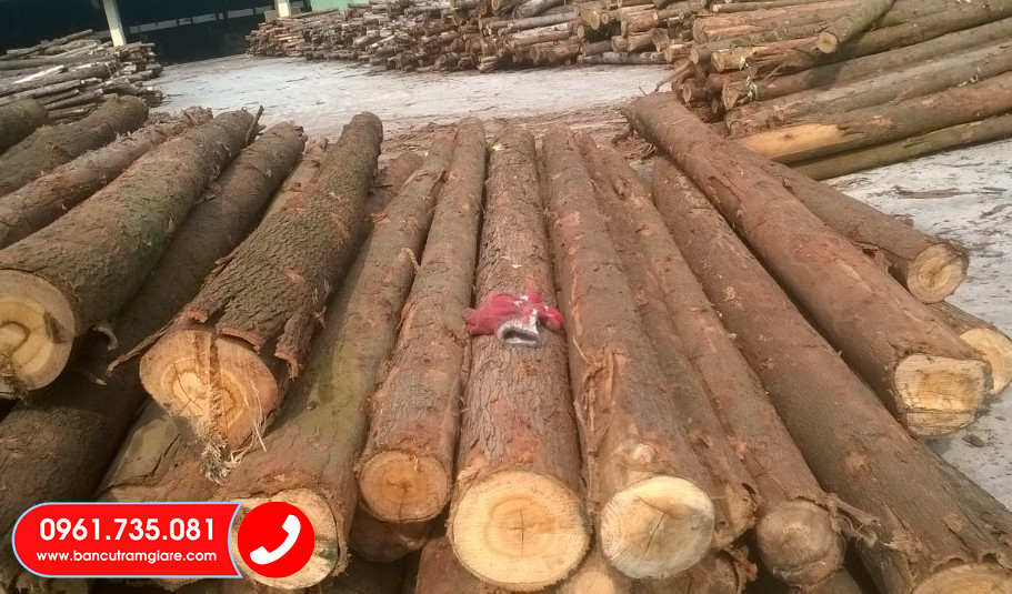 Báo giá cừ Bạch Đàn 2020, Mua bán cây chống bạch, cọc bạch đàn
