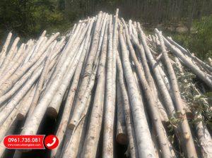Hưng Phát cung cấp cừ bạch đàn chất lượng giá rẻ, Bán cây chống bạch đàn TPHCM