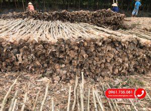 Báo giá bán cừ tràm tại Đồng Nai giá rẻ