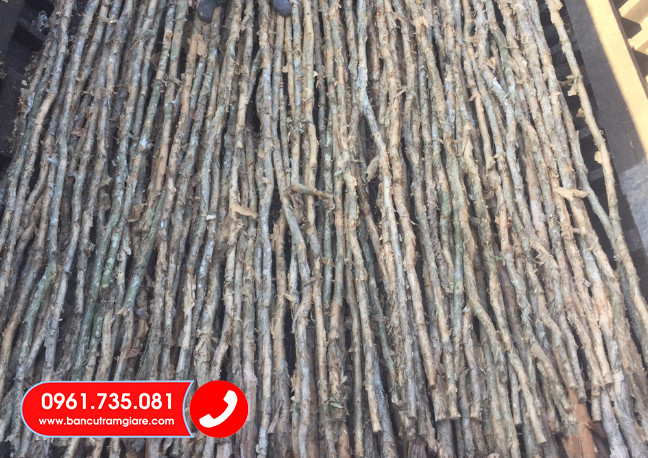 Báo giá bán cừ tràm tại Bến Tre giá rẻ Vựa cừ tràm Hưng Thịnh HCM